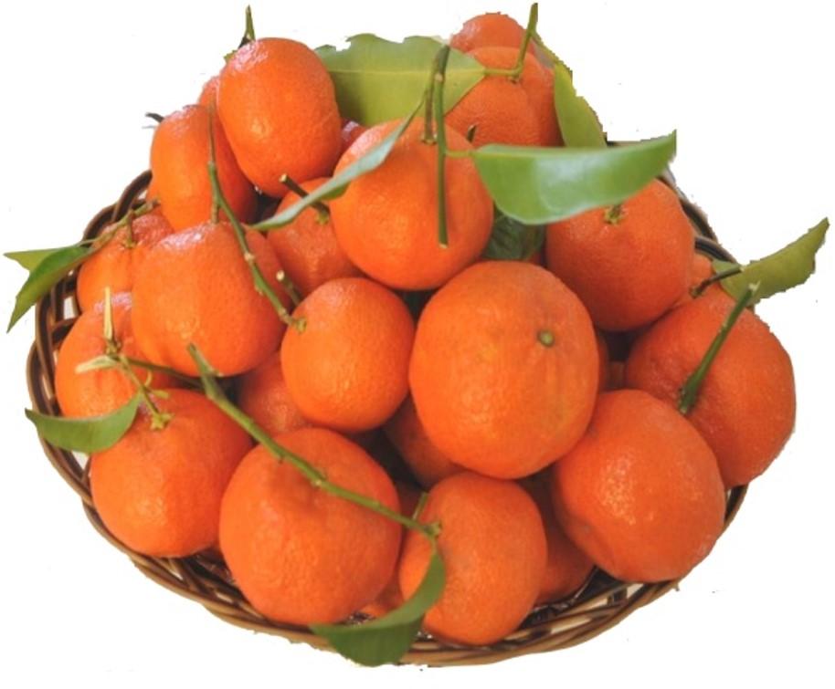 Mandarine Aya - INRA Maroc