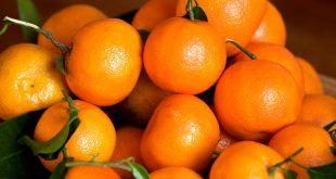 Aperçu du marché mondial des mandarines