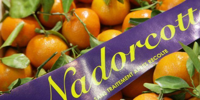 Allemagne absence des mandarines Nadorcott du Maroc