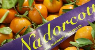 Les mandarines Nadorcott restent prisées sur le marché néerlandais
