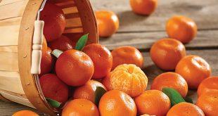La saison exportation mandarines turques désastre total