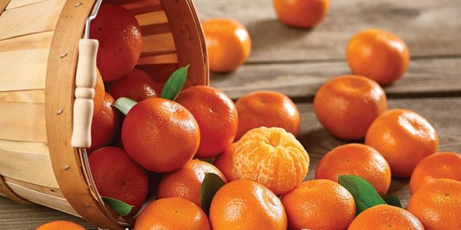 La saison exportation mandarines turques désastre total
