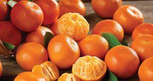 Mandarines le Maroc devient le 3ème exportateur mondial