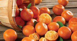 La-Slovaquie-détruit-des-mandarines-turques-pour-excès-de-pesticides-et-donne-l-alerte