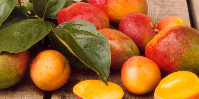 Égypte production mangues