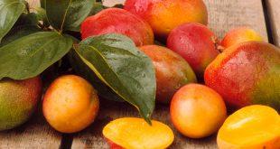 Les mangues ouest-africaines affichent une bonne performance en Europe