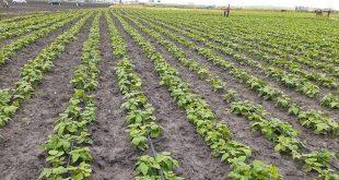 la Région Rabat-Salé-Kénitra enregistre de bonnes performances pour la campagne agricole 2019/2020.