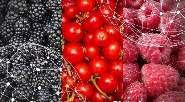 Aperçu du marché mondial des framboises, des mûres et des groseilles