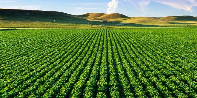 Baisse des taux de crédit pour un environnement favorable aux investissements agricoles au Maroc