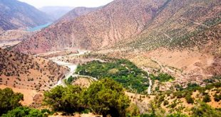 Le-Maroc-compte-plus-de-24000-espèces-animales-et-7000-variétés-végétales