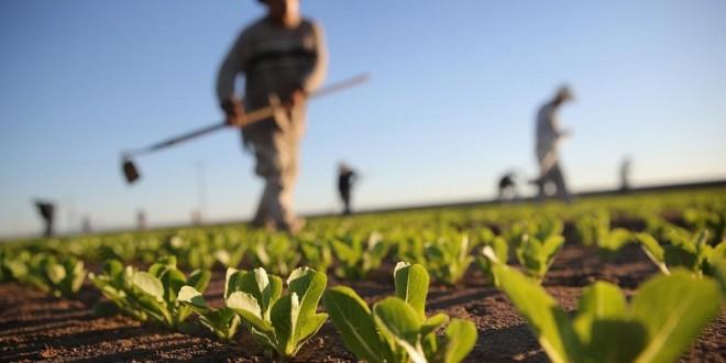 Selon le Dr Yussef Ben-Meir, les programmes de développement agricole du Maroc ne font pas l'unanimité