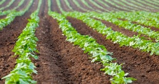 Acquisition des terres agricoles : L'Etat donne le feu vert en levant les restrictions