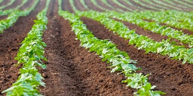 Terres agricoles Soulaliyates : Régularisation de 5 millions d'hectares