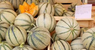 melons charentais jaunes bio