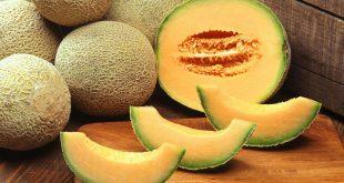 Le Maroc 4ème fournisseur en melon Union européenne