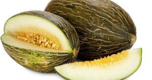 Melons : Les exportations du Maroc occupent la 6ème place dans l'UE avec 45,54 millions de kilos