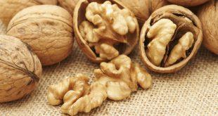 Allemagne est le premier importateur mondial de noix