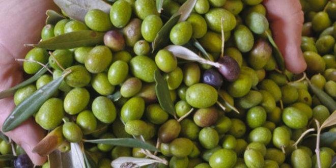 traitement déchets agricoles d'huile d'olive