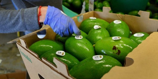 Oman: Nouvelle réglementation des importations de fruits et légumes