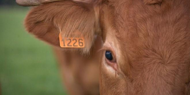 ONSSA: Externalisation de la gestion de la traçabilité animale ?