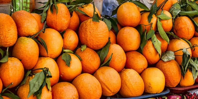 Marché mondial des oranges prix, demande, offre...