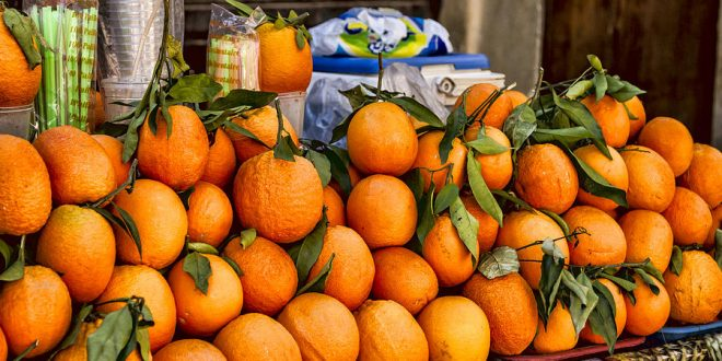 oranges-maroc-production