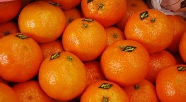 Oranges-Le-Maroc-fournit-près-de-32000-tonnes-à-l-Espagne