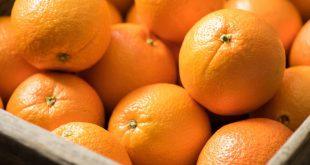 pénurie oranges imminente se profile aux États-Unis
