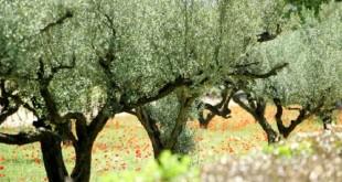 Oriental: 400% d'avancement pour le Pilier II du Plan Maroc Vert