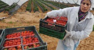 6100 saisonnières Marocaines en Espagne