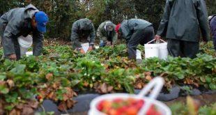 Souss-Massa : Campagne de sensibilisation des agriculteurs sur le Covid-19