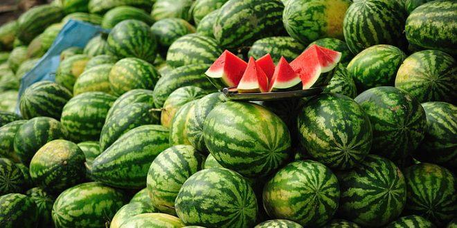 Pastèques : Les exportations du Maroc atteignent 45.397 tonnes en Espagne