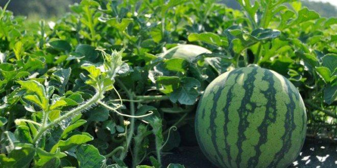 Akhannouch démonte les préjugés sur la consommation en eau dans l'agriculture