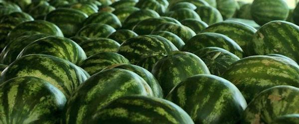 L'Allemagne rejette des pastèques d'Espagne pour excès de pesticides