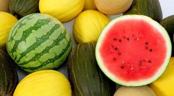 Aperçu du marché mondial du melon et de la pastèque