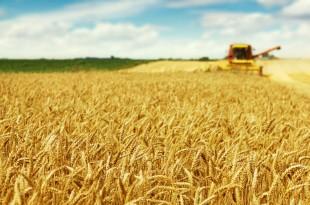 Les pays du Golfe investissent dans l'agriculture au Maroc