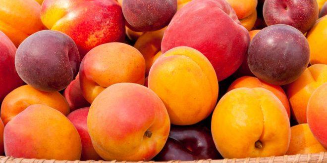 La Tunisie exporte fruits à noyau