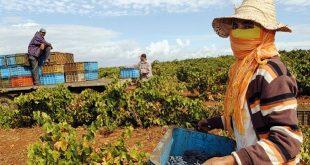 Classe rurale: Le Maroc oeuvre pour l'émergence de la classe moyenne rurale via l'activité agricole