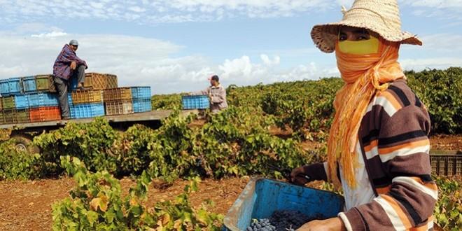 Emplois: Le secteur agricole marocain recèle 146.000 pertes d'emplois