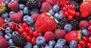 Le Maroc attire les entreprises latino-américaines de petits fruits
