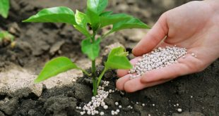 L-OCP-maintient-sa-place-de-leader-et-reste-le-premier-exportateur-mondial-de-phosphates