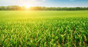 Le Plan Maroc Vert (PMV) sauve la valeur ajoutée agricole
