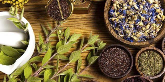 L-Égypte-exporte-55-millions-de-dollars-de-plantes-médicinales-et-d-herbes