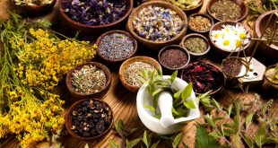 Plantes aromatiques et médicinales : Mise en place d'une unité de valorisation à Ouezzane