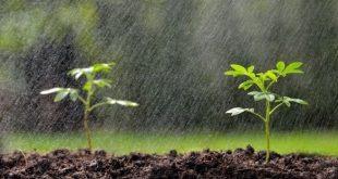 Déficit pluviométrique : Le déploiement des mesures d'urgence pour sauver la campagne agricole en place
