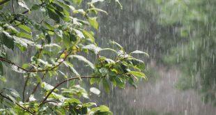 Berrechid dernières pluies agriculteurs