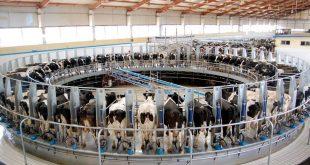plus grande ferme laitière du monde
