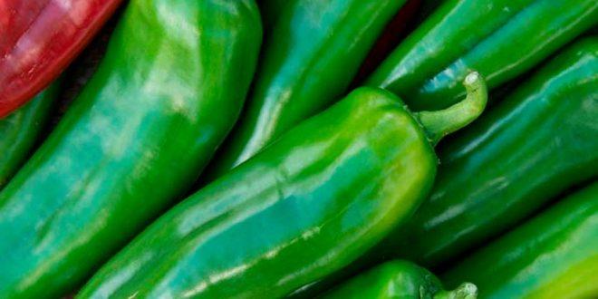 Exportation de poivrons: Le Maroc décroche la 5ème place mondiale