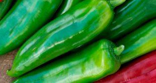 Espagne : près de 85% des poivrons achetés proviennent du Maroc