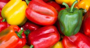 La Turquie augmente ses exportations de poivrons de 35%